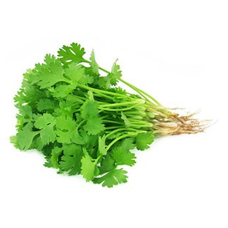 Fresh Coriander available online at Vegberry in Dubai, UAE