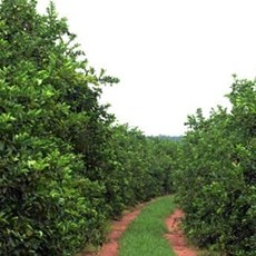 Gibran citrus fruit farms