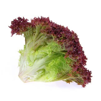 Fresh Lollo Rosso Lettuce available online at Vegberry in Dubai, UAE
